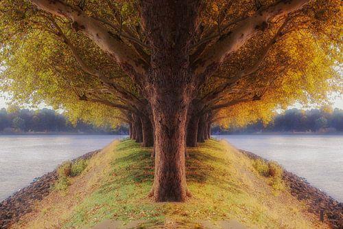 de 2 seizoenenboom van