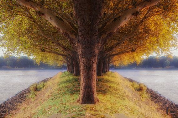 de 2 seizoenenboom
