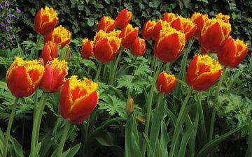 Tulpenfeld van Marion Engelhardt