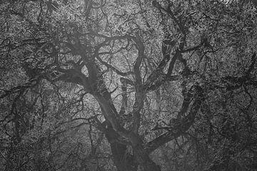 Boom in tegenlicht van Leendert Noordzij Photography