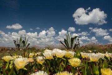 Wolkenluchten in de Algarve van Susan van der Riet