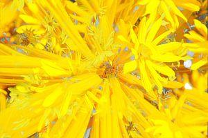 Sonnenhut (Rudbeckia fulgida), abstrakt, Blüte, Blume, Blumen