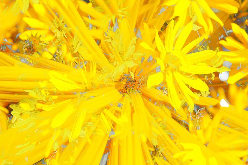 Sonnenhut (Rudbeckia fulgida), abstrakt, Blüte, Blume, Blumen von Torsten Krüger