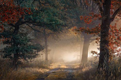 Begin van de herfst in een mistig bos