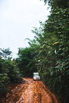 Op weg naar de jungle van Yvette Baur