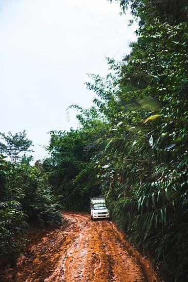 Op weg naar de jungle