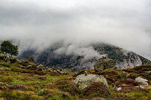 Opkomende mist in de bergen van Noorwegen. van