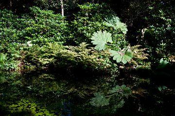 Japanese Garden von Michel Mees