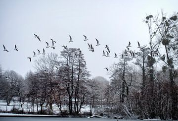 meeuwen in de sneeuw sur Bas Quaedvlieg
