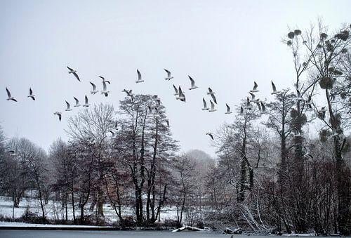 meeuwen in de sneeuw van