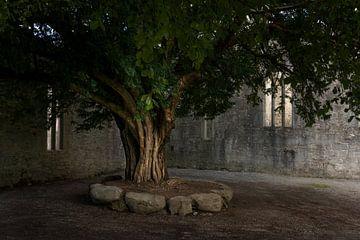 Muckross Abbey, Ierland van Bo Scheeringa Photography