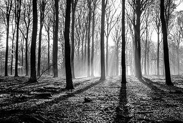 das Arboretum des Speulderbos von Mike Bot PhotographS
