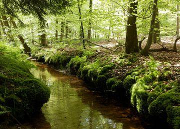 Small brook  von Titia Buren