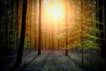 Zon door het bos von Erwin Stevens
