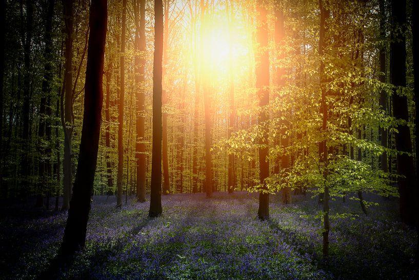 Zon door het bos van Erwin Stevens