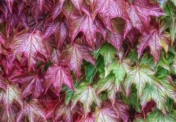 Nuances d'automne de feuilles  sur Marcel van Balken