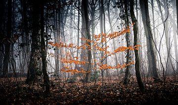 Mystiek bos in de mist van Nils Steiner