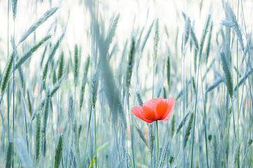 Mohn | Blumen Kunst | Niederlande von Marika⎪natuur-fotograaf