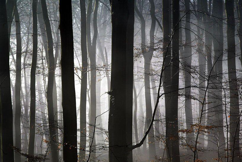 Herfst van Luuk van der Lee