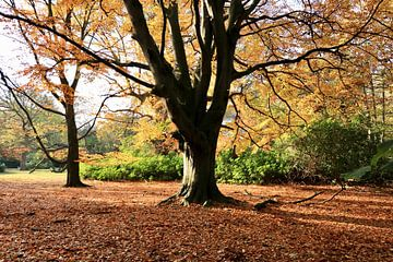 De boom met gouden bladeren van Wendy Hilberath