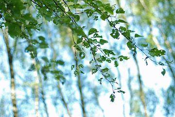 Dansende bladeren van