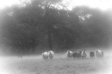 De schapendrijver von