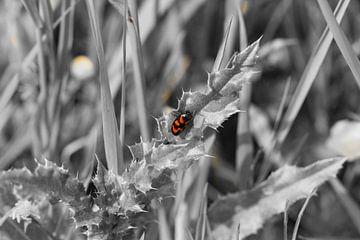 Kleine dieren, zwart/wit en kleur van Dany Tiels