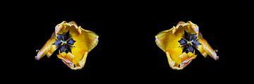 Bewerkte macrofoto van een tulp aan het einde van haar bloei van Ribbi The Artist