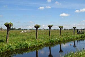 Niederländische Polderlandschaft in der Region Krimpenerwaard von Robin Verhoef