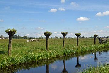 nederlands polderlandschap in de Krimpenerwaard van Robin Verhoef