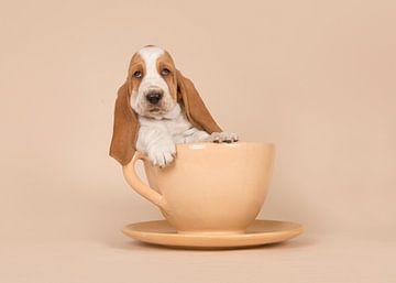 Cup of basset van Elles Rijsdijk