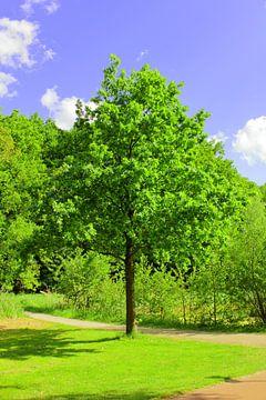 Zomer, zon en groen rondom de Kralingse Plas van Capture the Moment 010