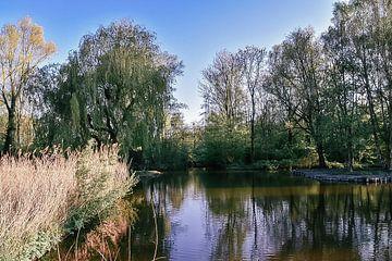 Wunderschönes Naturfoto im Wald mit schöner Aussicht über das Wasser von Jennifer Petterson