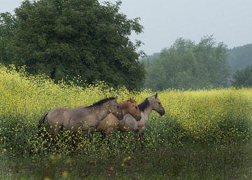 Utrechtse Heuvelrug-wilde paarden bij Palmerswaard 02 sur Cilia Brandts