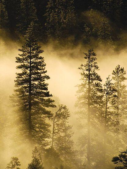 Mist en zonnestralen in Yosemite