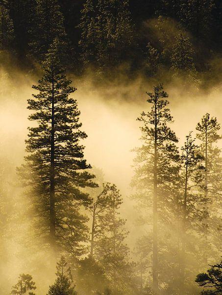 Mist en zonnestralen in Yosemite van Ricardo Bouman