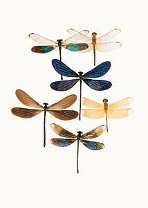 Rariteitenkabinet_Insecten_10