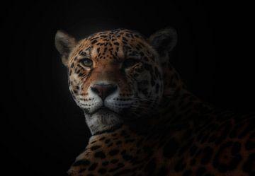 jaguar, KaMerA