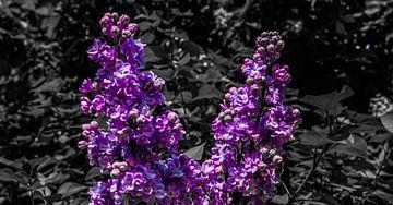 Paarse bloemen von Jane Changart