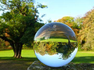 Boom in glazen bol, foto's van glazen bollen van RaSch_Design