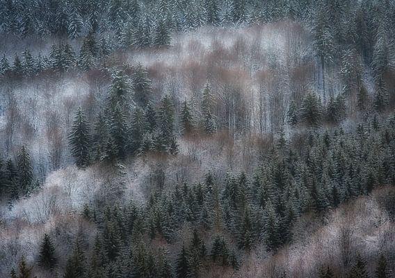 Forêt d'hiver rêveuse
