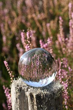 Heidebloesem - gezien door de glazen bol van Anja Bagunk