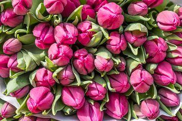 Bosje tulpen von Harry Kors