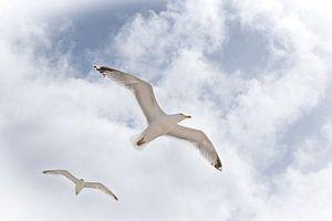 Freiheit'.