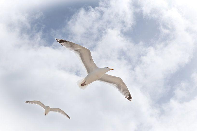 Freiheit'. von Tanja Otten Fotografie