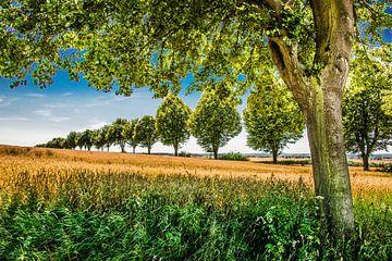 Bomenrij von Harrie Muis