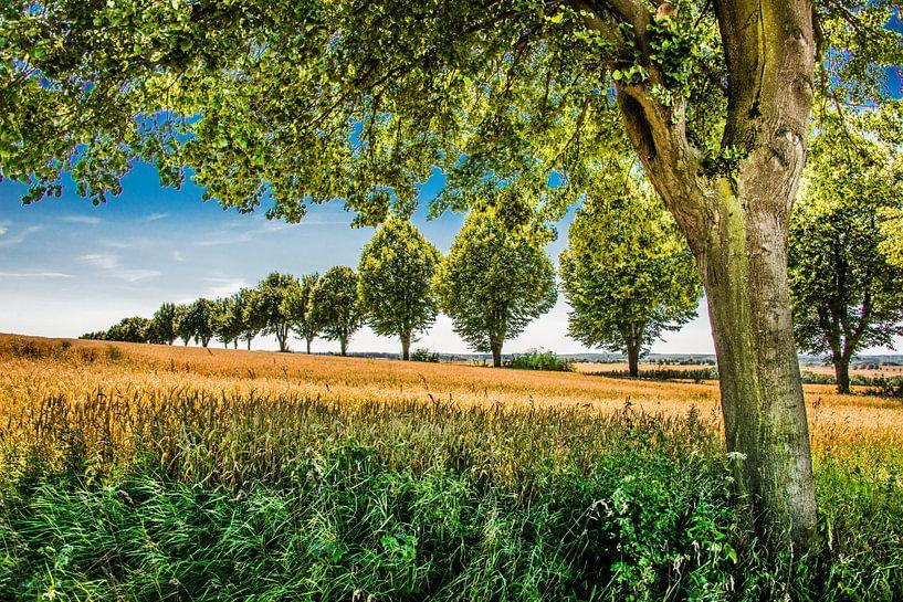 Bomenrij van Harrie Muis
