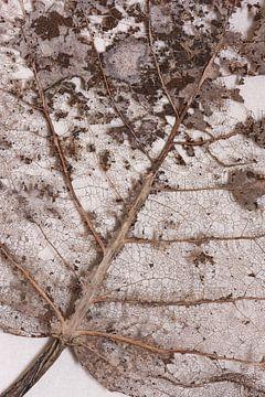 Verdord blad  patronen structuur van Lucia Leemans