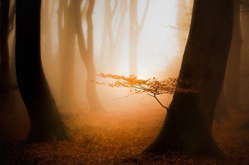 Zon, mist en een mooi bos van