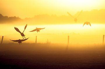 In vogelvlucht van Marc Hollenberg